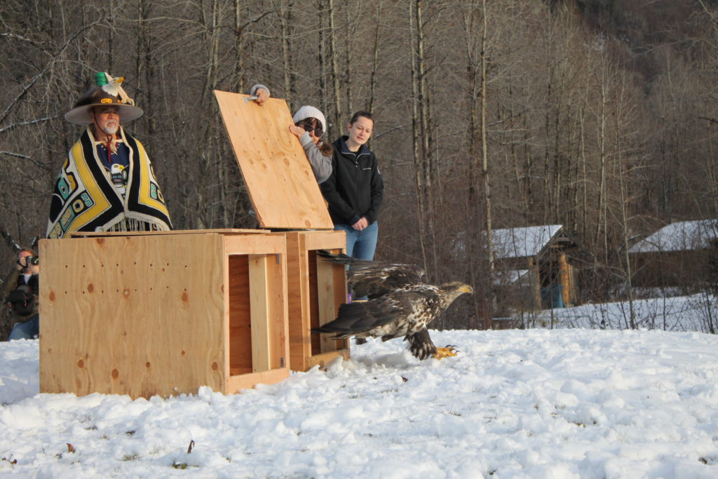 Sidney Campbell and Jack Strong help a lucky bidder release a bald eagle into the wild. (Henry Leasia / KHNS)